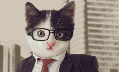 bigstock-Cat